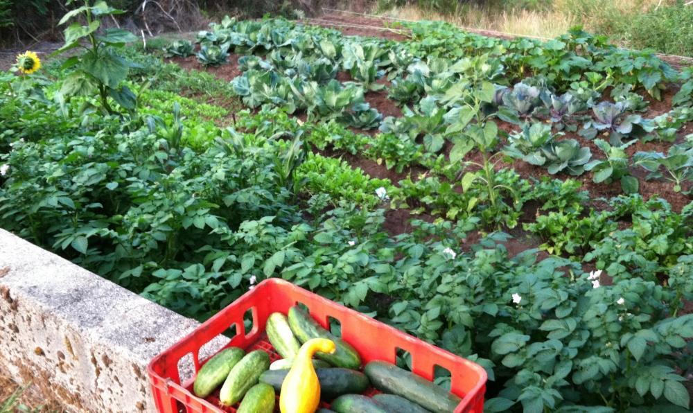 My garden of eden...