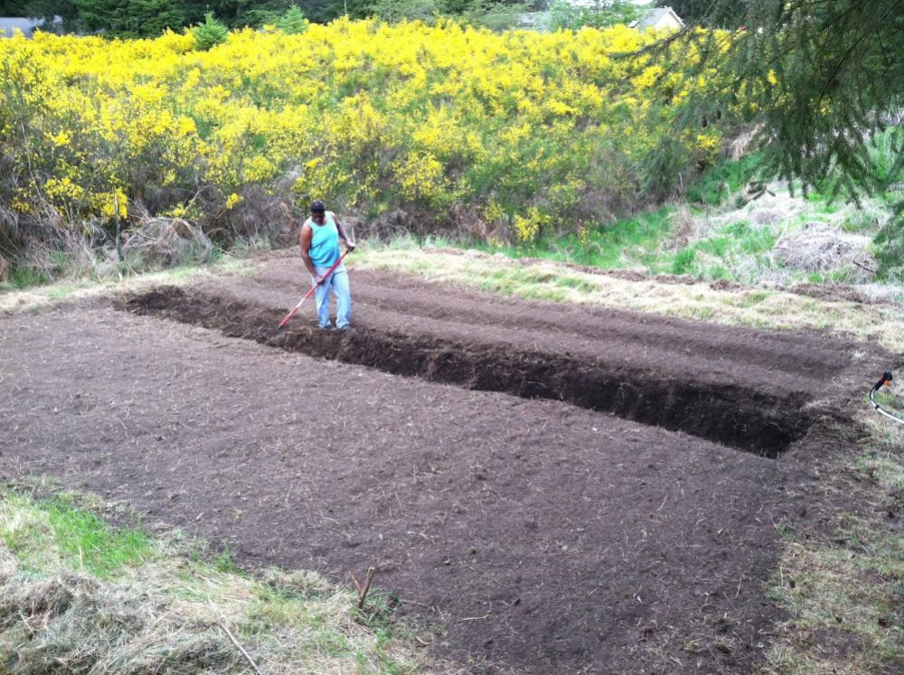 My hardworking Daddy carved out a bit of black gold in order to sow my Momma some more seeds as a gift on Mother's Day, earlier this year...