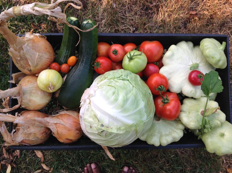 Farm fresh foodways...figuring out what to make for supper.