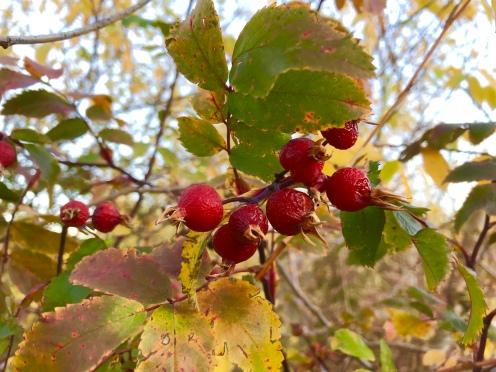 Burst of Berries
